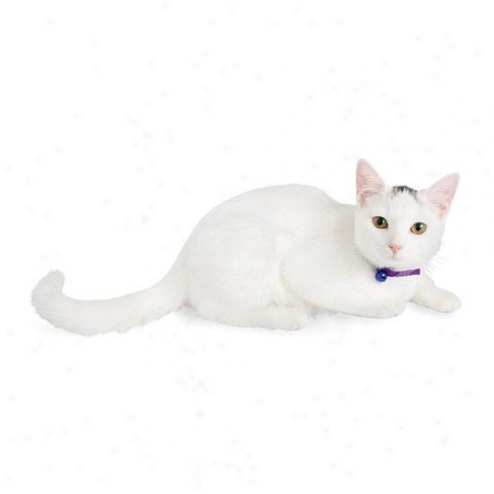 Petmate Aspen Pets Eco Friendly Breakaway Cat Collar In Blue