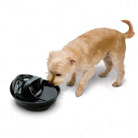 Smartcat Ceramic Drinking Fountain In Black