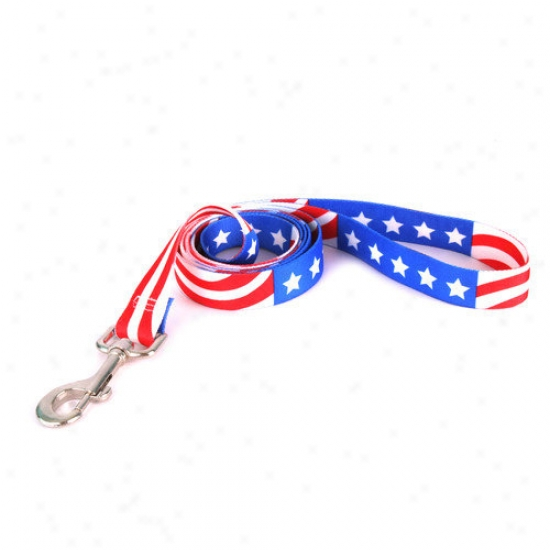 Yellow Dog Design Americana Standard Collar