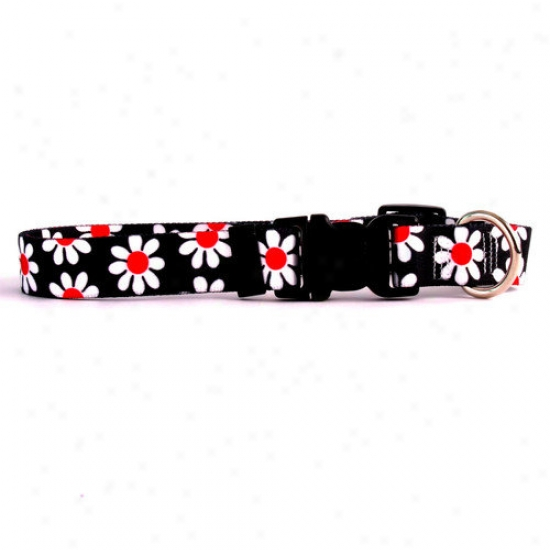 Yellow Dog Design Black Daisy Standard Collar