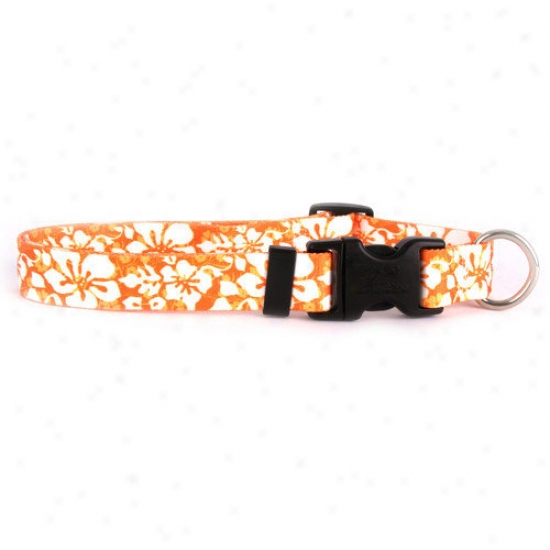 Yellow Dog Design Islaand Floral Standard Collar