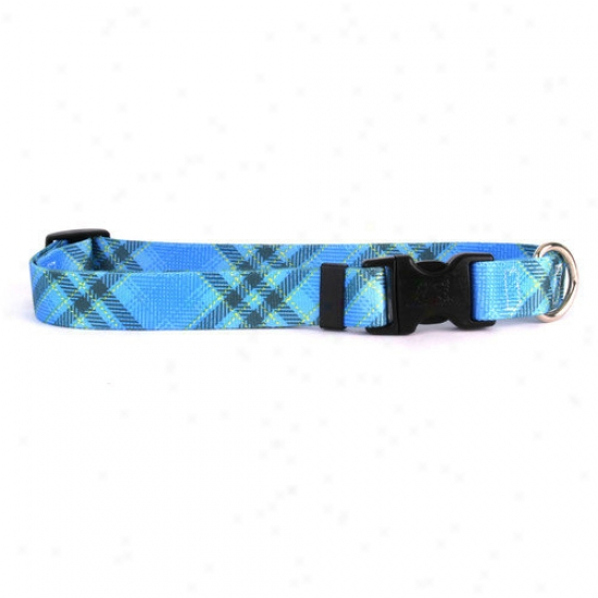 Yellow Dog Design Kilt Standard Collar