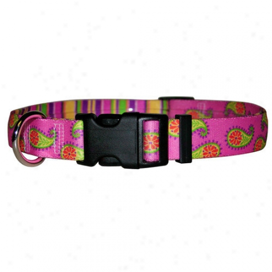 Golden Dog Design Paisley Standard Collar
