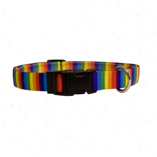 Yellow Dog Design RainbowS tripes Standard Collar