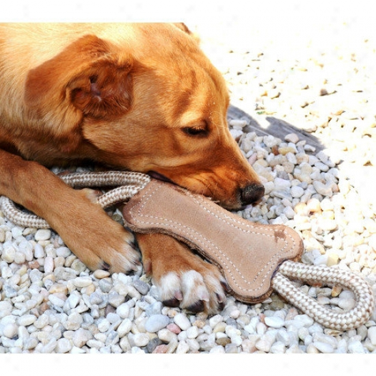Abo Gear Hard pull Bone Dog Toy