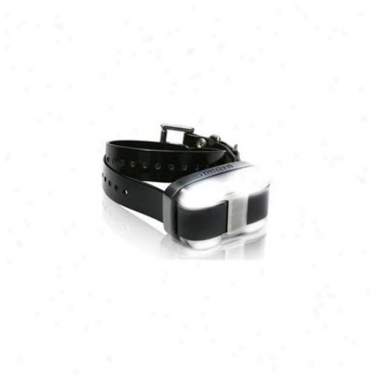 Agm Distribution Collar-dg-edge-bk Dogtra Edge Add A Dog Collar With Black Strap
