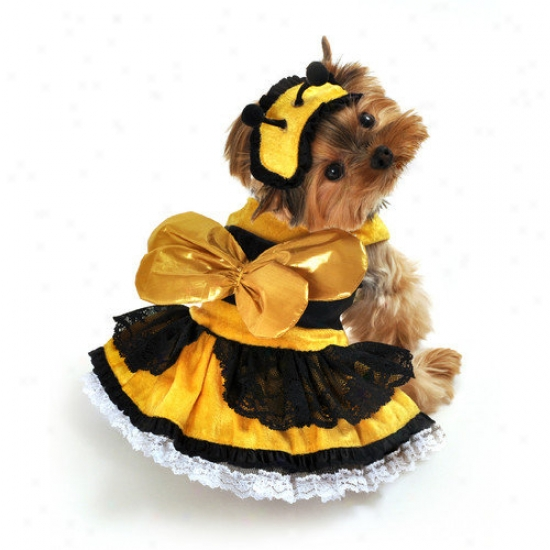 Anit Accessories Honey Bee Dog Costume