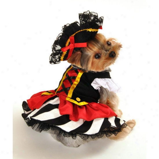 Anit Accessories Pirate Girl Dog Costjme