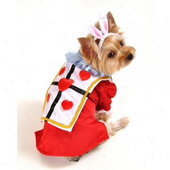Anit Accessories White Rabbit Dog Costume