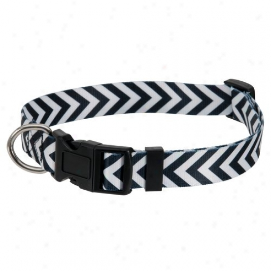 Aspen Pet Large Fasbion Pet Collar, Black/white