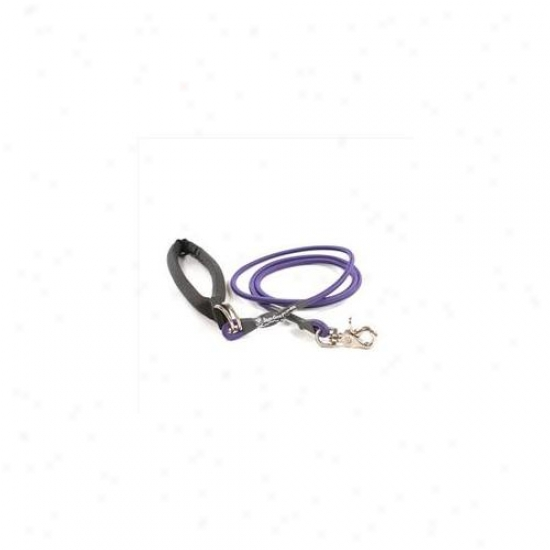Bungee Pupee Bp105 Small Up To 25 Lbs - Prple 6 Ft.  Leash