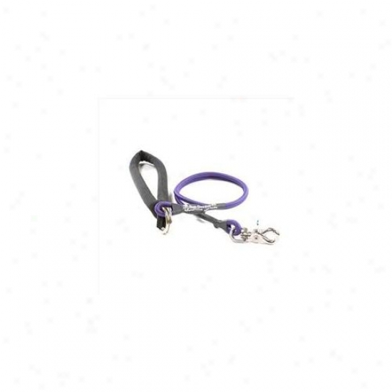 Bungee Pupee Bp105l Small Up To 25 Lbs - Purple 3 Ft.  Leash