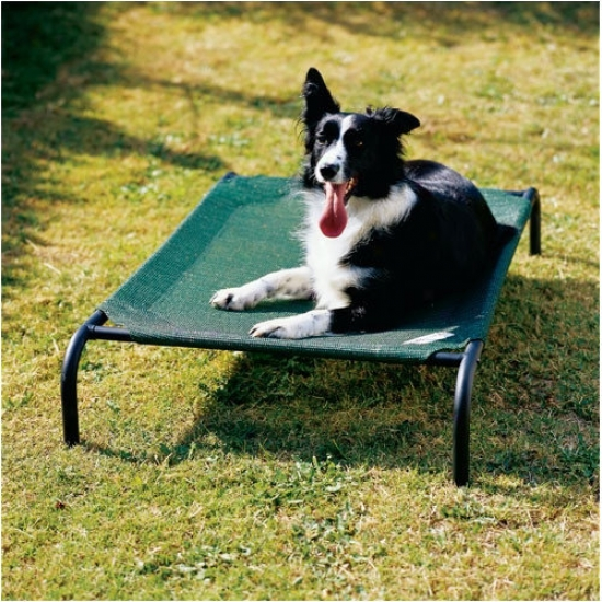 Coolaroo Elevated Indoor//outdoor Pet Cot For Medium Breeds