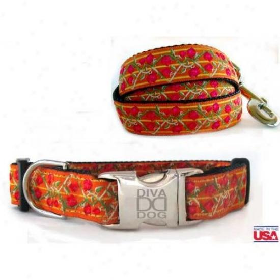 Diva-dog 2584299 Bombay M/l Collar And Leash Set