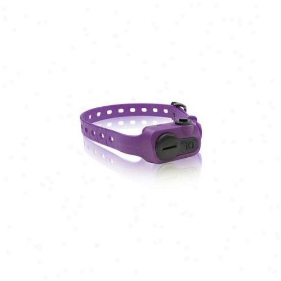 Dogtra Iq-bark-pur Iq No Bark Collar Purple