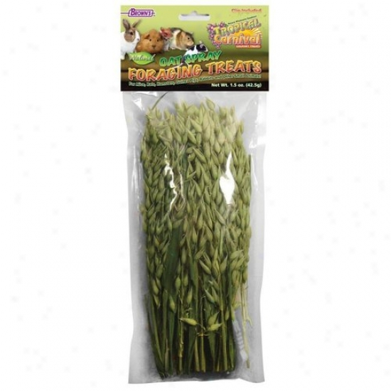 Fm Browns 44964 Tropical Carnival Oat Spray Foraging Treats