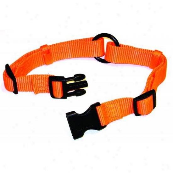 Hamilton Pet Fals 18/26 Or Adj Saferite Dog Collar
