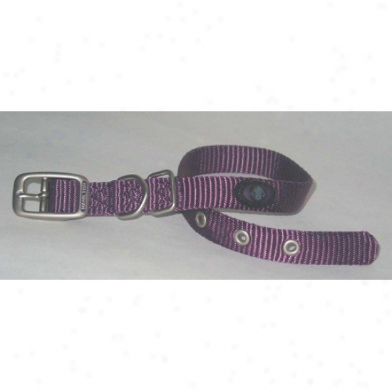 Hamilton Pet Products Dog Collar In Purple