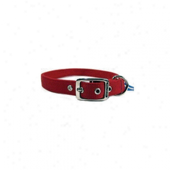Hamilton Pet Products Double Thick Nylon Deluxe Dog Collar In Red