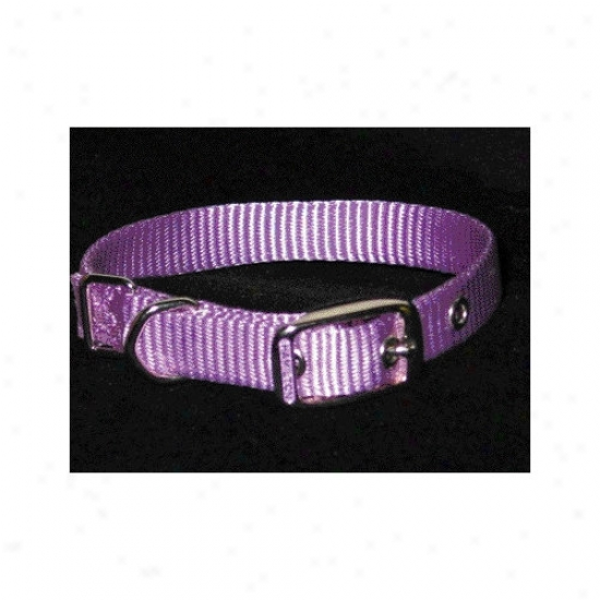 Hamilton Pet Products Single Thick Nulon Dog Put a ~ on In Lavender