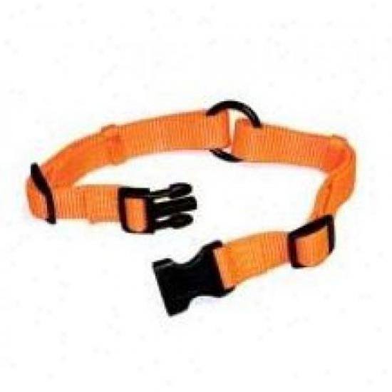 Hamilton Favorite Sr/tape 24or 24-inch Safe-rite Dog Collar, Orange