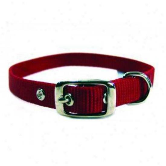Hamilton Pet St 18rd Single Thick Nylon Dog Collar