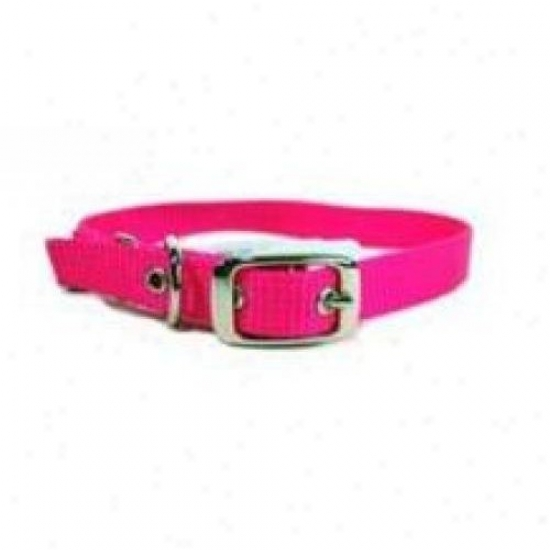 Hamilton Pet Ste 12hp 12-inch Single Thick Nylon Dog Collar, Pink