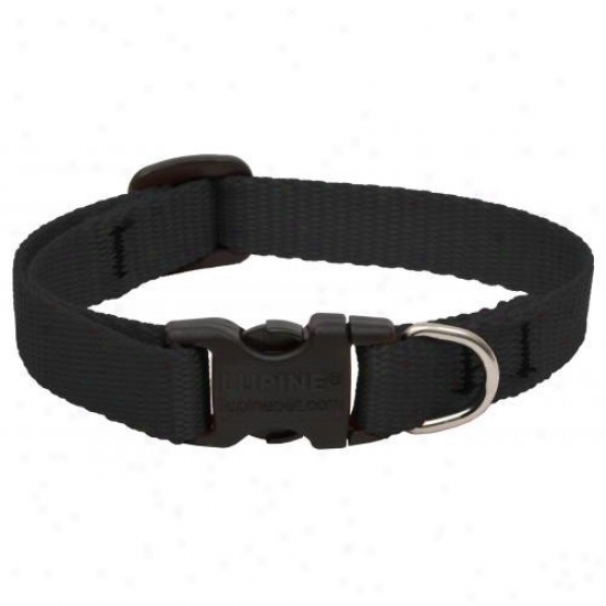 Lupine Inc 27534 1/2 Inch X 8 Inch - 12 Inchh Adjustable Black Collar For Small Dogs And Puppies