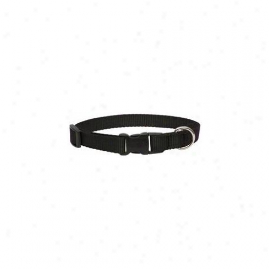Lupine Ihc . 75inch X 11inch-17inch Adjustable Black Dog Collar  27502