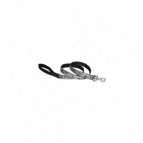 Lupine Pet 746889810599 Web Master 6 Ft.  Lead