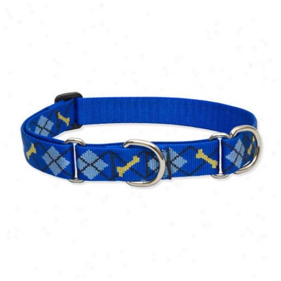 Lupine Pet Dapper Dog 1'' Adjustable Large Dog Combo Collar