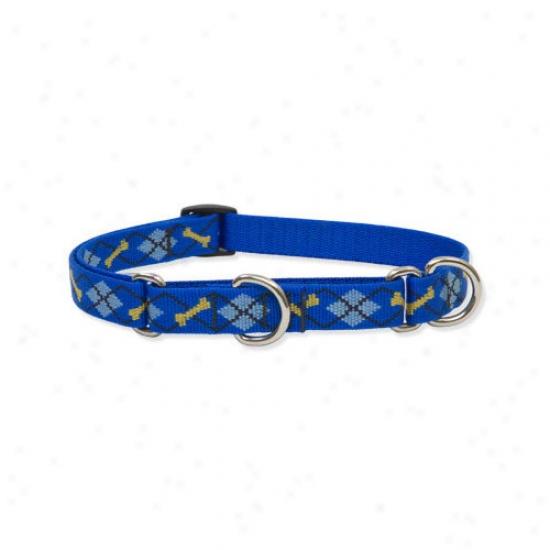 Lupine Pet Dapper Dog 3/4'' Adjustable Medium Dog Combo Collar