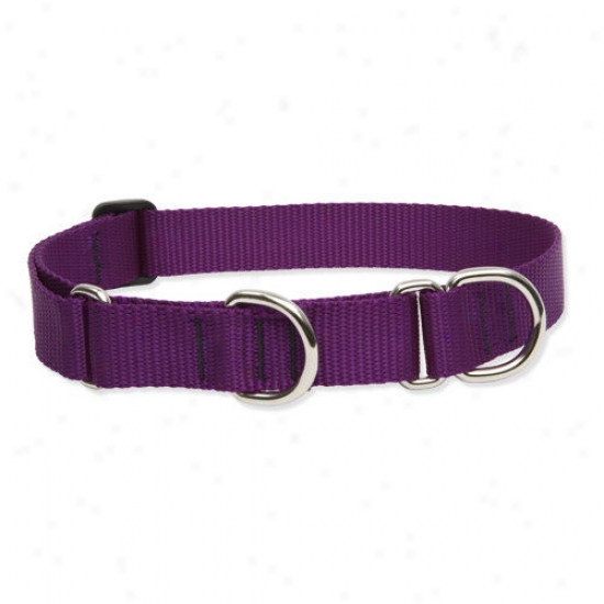 Lupine Pet Solid Color 1'' Adjustable Large Dog Combo Collar