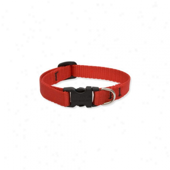 Lupine Pet Solid Color 1/2'' Adjustable Small Dog Collar