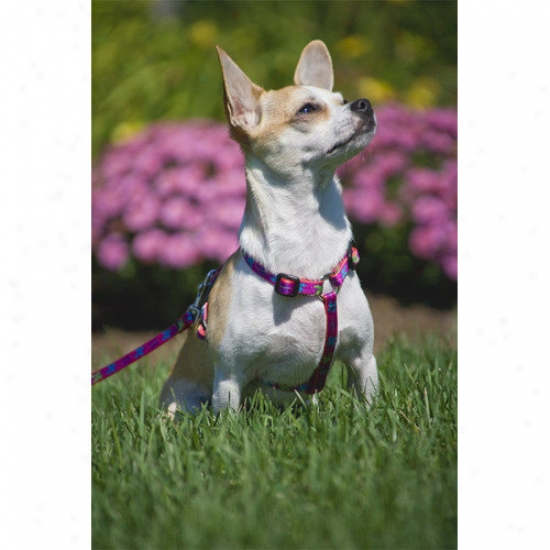 Lupine Pet Wing It 1/2'' Adjustable Small Dog Roman Harness
