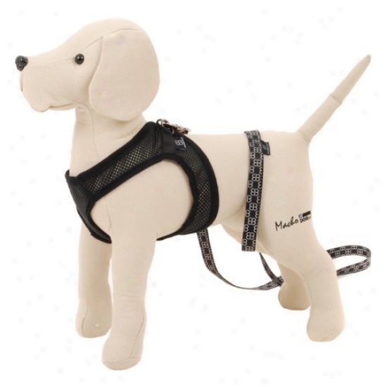 Pet Ego City Airness Harness And Leash For Dogs