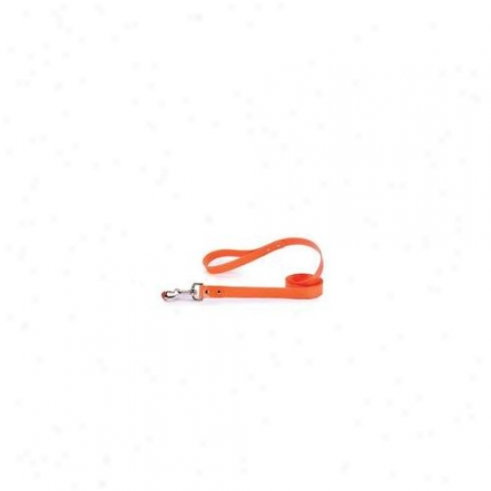 Pet Pals Za1314 44 69 Gg Waterproof Lead 4 Ft X . 62 In Orange P