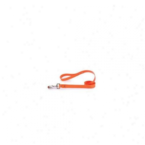 Pet Pals Za1314 66 69 Gg Waterproof Lead 6 Ft X 1 In Orange P