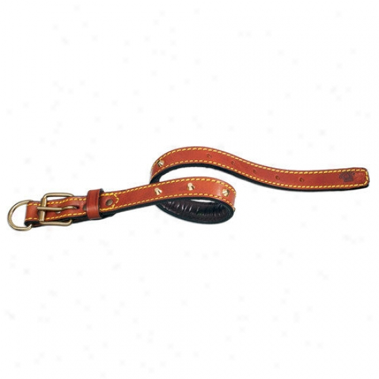 Petego Classic Padded Leather Dog Collar With Studs