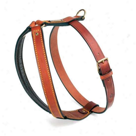 Petego Classic Pitbull Leather Dog Harness