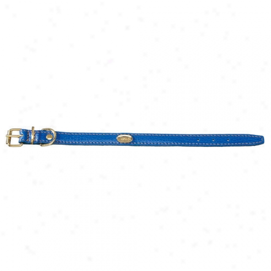 Petego Fashion Flat Leather Dog Collar In Blue