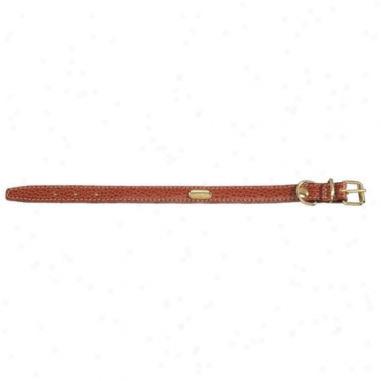 Petego Fashion Flat Leather Dog Collar In Brown