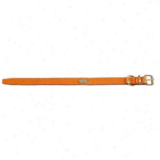 Petego Fashion Fllat Leather Dog Collar In Orange