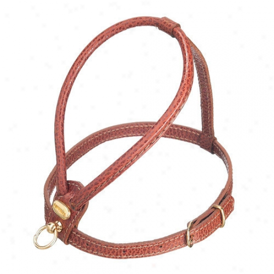 Petego Fashion Leather Dog Harness In Brown