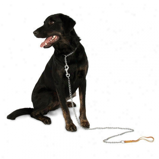 Petmate Aspen Pets Lightweight Mighty Link Chain Collar