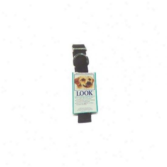 Petmate Aspen Pets Nylon Dog Collar