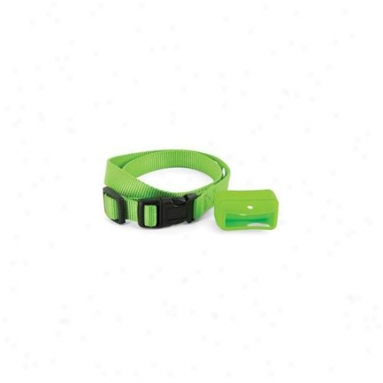 Petsafe Bigskin-g Petsafe Big Skins - Green - Pac00-12777