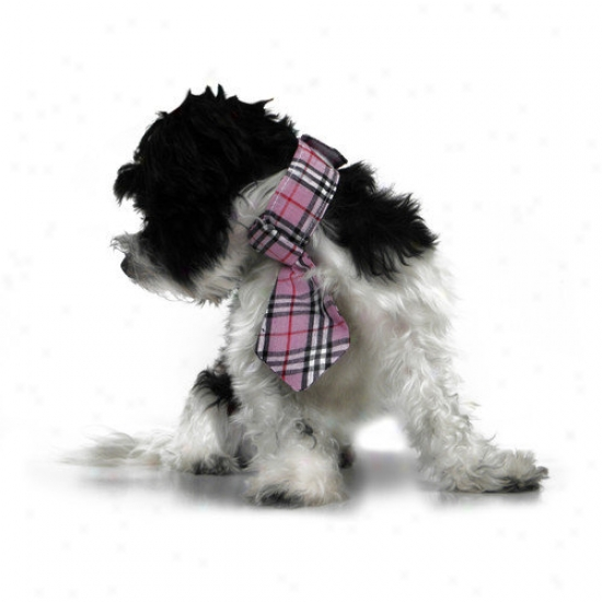 Platinum Pets Formal Dog Necktie And Collar
