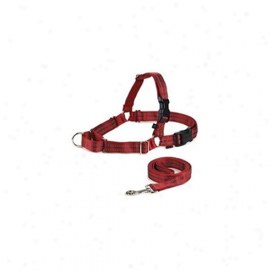 Premier Ewhrefhcs-mred Reflective Easy Walk Harness Small - Medium Red With 3-4 X 6 Leash