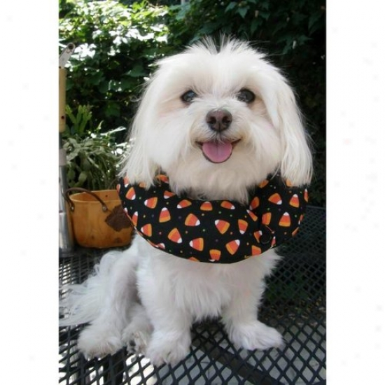 Puppy Bumpers Candyc1013 Candy Corn Puppy Bumper 10 To 13in